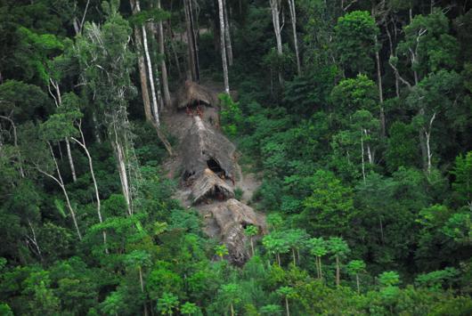 Les indigènes contre le «business» de la protection des forêts
